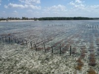 One of Cargill's sustainable seaweed farms