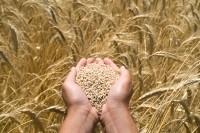 Cargill buys fibre technology after Tate & Lyle wheat processing exit