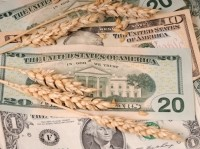 Wheat supplies are protected by price spikes, says analyst