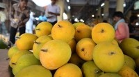 India's 'king of fruits' exiled from Europe following produce ban