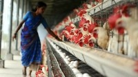 EU lifts poultry meat ban while US complains to WTO of Indian embargo