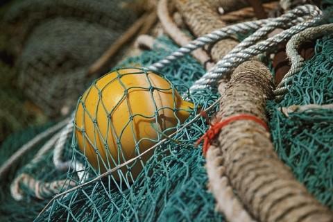 Driftnet Fishing Essay Sample