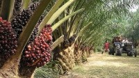 Ex Greenpeace boss: FMCG firms will drive sustainability for palm oil